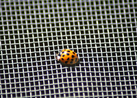 Insect Screen